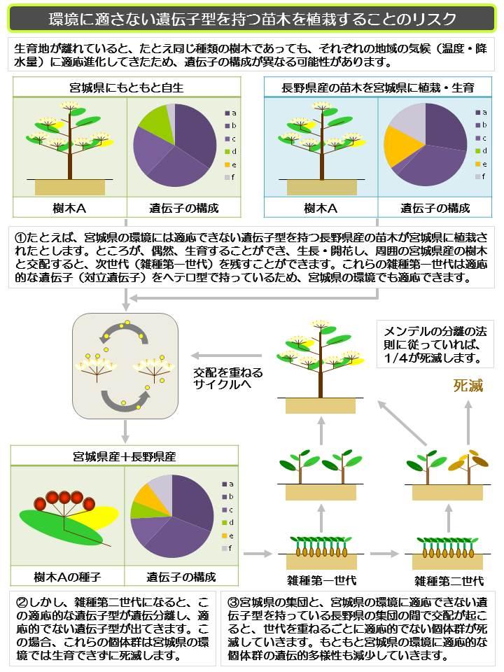20130911 たねぷろじぇくと地域性苗木を使わないリスク