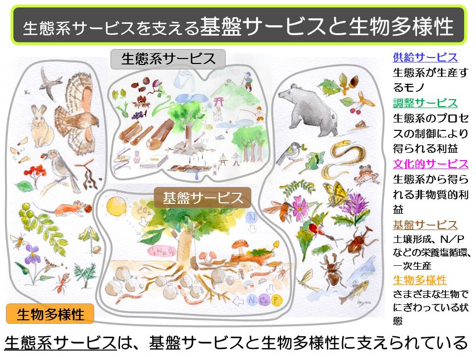20130912 たねぷろじぇくと基盤サービス・生物多様性